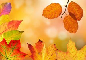 autumn-1649362_960_720
